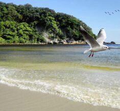 Les 3 plus belles plages à voir durant votre prochain séjour au Brésil